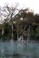 Cypress Trees by the river by goodiebagstock