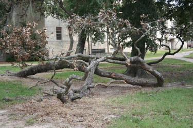 twisted tree by goodiebagstock