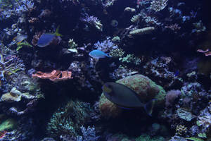 Undersea life 03 by goodiebagstock