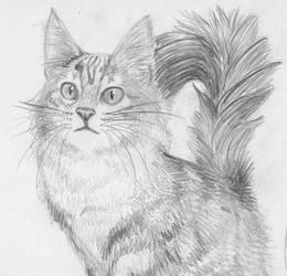 El Gato by cyberhare