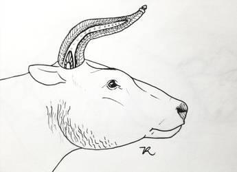 Inktober aurochs by zachrobinson