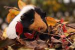 Autumn Mmi by Calitha-Lena