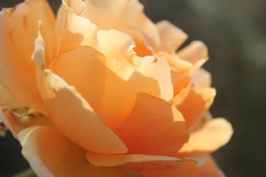 orange flower by Or-else-what