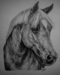 Horse by 26lisamarie