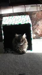 Box cat by ulyferal