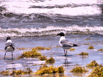 Seagulls on the beach by KattyMax
