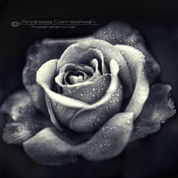 Bloom III by FrozenStarRo