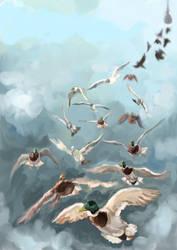 Flying birds by Akiratmeo