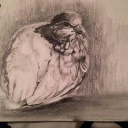 Ray Ching bird study by Akiratmeo
