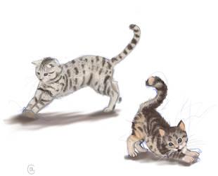 Kittehs by Taiyles