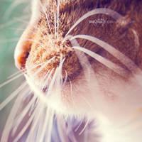 kitty by miezeTatze