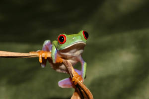 The inquisitive frog by AngiWallace