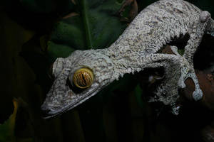The night stalker gecko by AngiWallace
