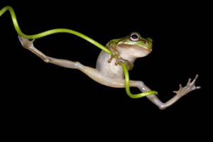 The acrobatic frog by AngiWallace