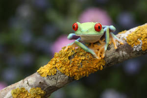Frog patience by AngiWallace
