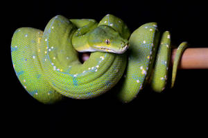Beauty in a snake by AngiWallace