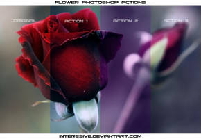 Flower Photoshop Actions by interesive