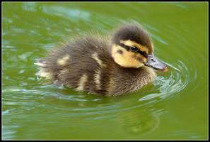 Fuzzy Duck II by nitsch