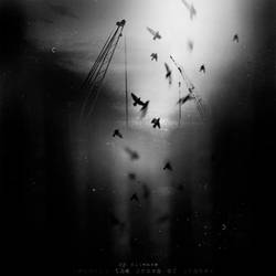 Beneath The Crown Of Cranes by disies
