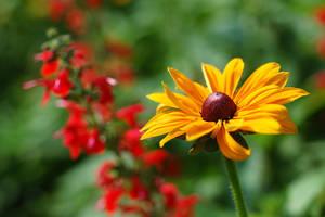 Summer flowers by karlomat