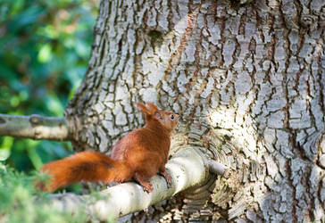 Portrait of a Squirrel by karlomat