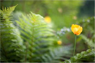 In a garden by karlomat