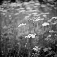 Silence by karlomat