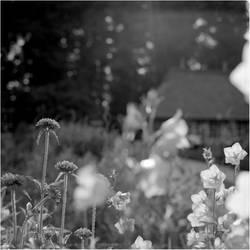 Summer by karlomat
