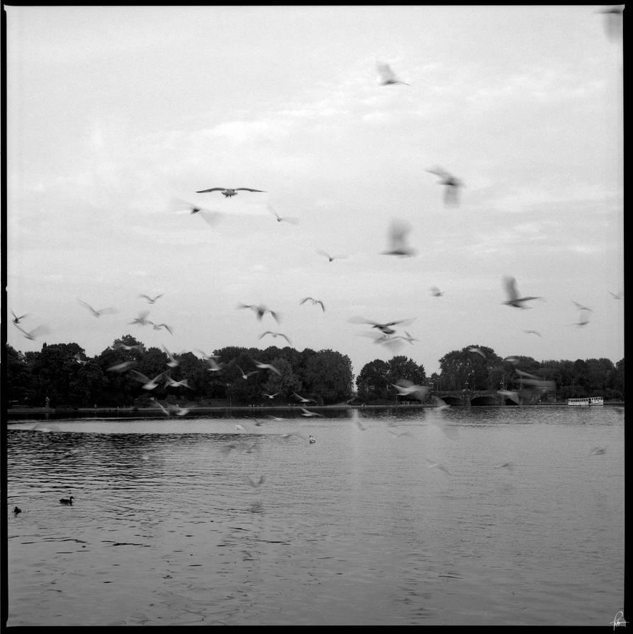 Birds by karlomat