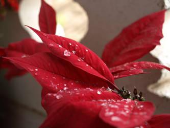 hojas.. by abllogra