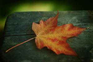 Fist of Autumn by brittanycruickshank