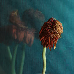 Dead Flowers03 by brittanycruickshank