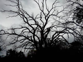 Dead tree by Itsmil