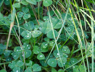 clovers 2015 by Itsmil
