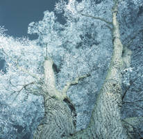 Night, tree and winter by WiorkaEG