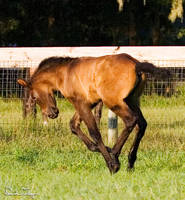 Foal Canter by Deirdre-T