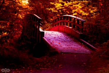 Forest Bridge by Deirdre-T