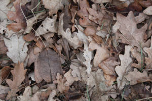 Leafs Texture Stock 1 by GregKmk