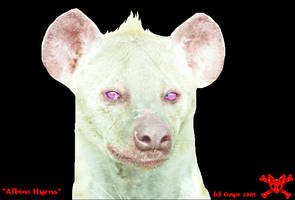 Albino hyena by pucksgryn