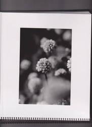 analog experiences series VI by PhilipMatthews