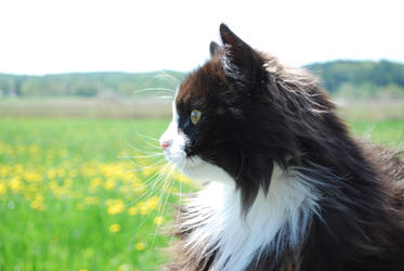Sharp cat by Roserud