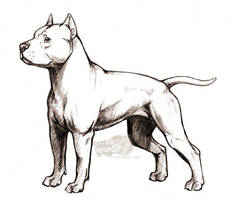 APBT by rgyoung