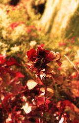 Color Of Red by Mystic-Majinbuu
