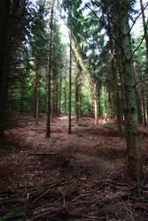 Forest by Skanatiker