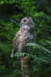 Owl by Skanatiker