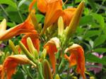 Flowers by debh945