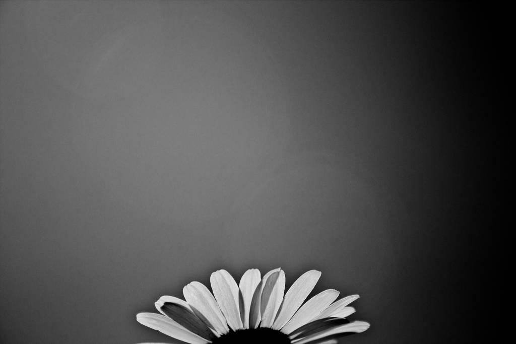 Black N White Flower Wallpaper By Luckysam444 On Deviantart