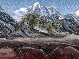 Snow Leopard by Sandusky78