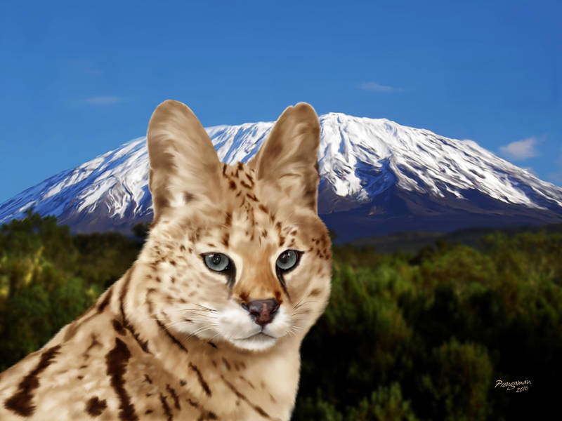 Serval Summit by Sandusky78