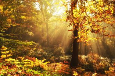 Autumn by Svennovitch